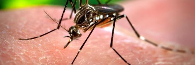 Saiba tudo sobre a febre chikungunya, doença com sintomas parecidos com os da dengue