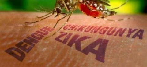 Saiba como identificar e prevenir o Zika vírus