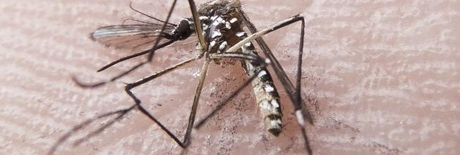 O que se sabe e o que falta saber sobre relação entre zika vírus e microcefalia